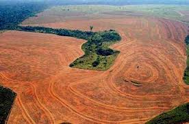 Soy plantation