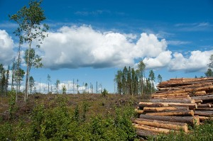 Houtwinning in Finland