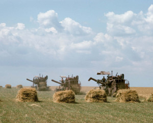 Agriculture in the Ukraine