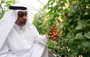 greenhouse project qatar
