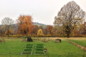 Biochar test field in Tübingen