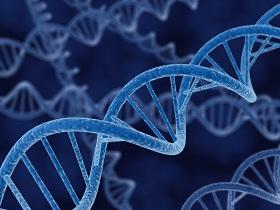DNA strengen