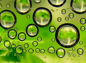 Ecover will produce its surfactants only from algae.