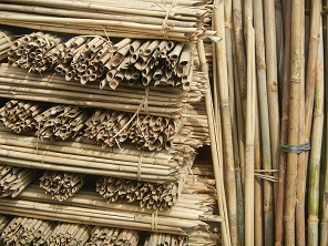 Bamboo as a solution for CO2