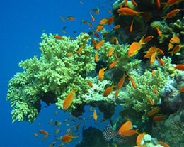 SeaLife1