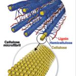 Lignocellulose