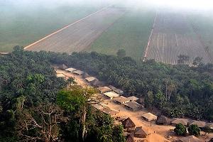 Addax Plantation Sierra Leone