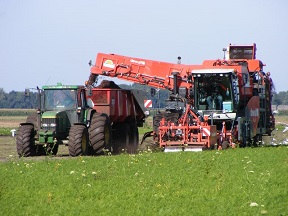 Dutch agriculture