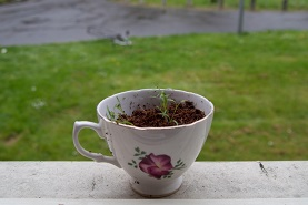 Teacup as image of sustainability