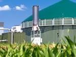 Veel biomassa wordt gebruikt voor de productie van bio-energie