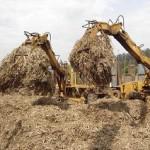 Wat is biomassa eigenlijk?