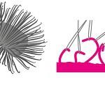 De haken van de klis inspireerden George de Mestral tot de uitvinding van de klittenband (p.29-31).