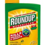 Many of Monsanto's commercial varieties are made resistant to its herbicide glyphosate, sold under the name of Roundup.