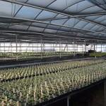 Kwekersrecht, octrooirecht en genetische modificatie