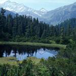 Alpine forest. Photo courtesy WWF