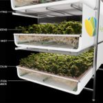 The AeroFarms model: plant roots enter into a separate space that provides them with water and nutrients.