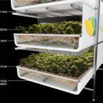Het AeroFarms model. De planten wortelen door een doek heen, de wortels komen in een aparte ruimte waarin ze worden voorzien van water en voedingsstoffen.