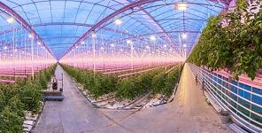 precision horticulture greenhouse