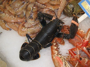 Chitosan is produced among others from shrimp and crab shells,