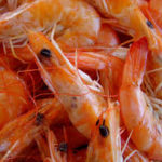 Shrimp shells are an important resource for the production of chitin, the feedstock for chitosan.