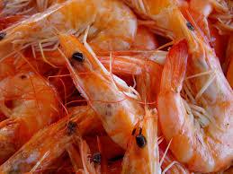 Shrimp Nano3Bio