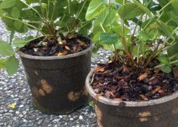 Biologisch afbreekbare Solanyl plantenpotten
