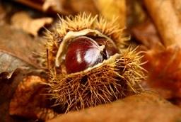 chestnut World Bio Markets