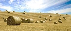 field rolls
