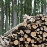 Biomass, one of the pathways to renewable carbon