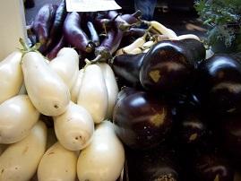 Bt aubergines