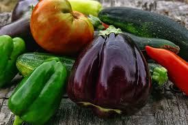 Eggplants modern biotechnology