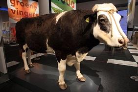 Herman the Bull