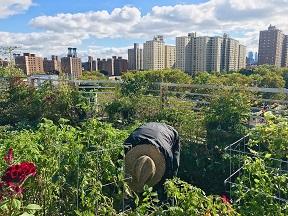 trees rooftop garden