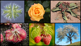 plantaardige biodiversiteit