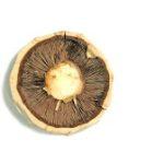 Mushroom. Freeimages.com, Tibor Fazakas.
