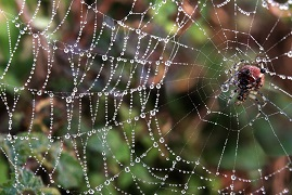 animals in the bioeconomy spider