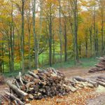 Biomass: beech wood.