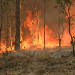 Are Australian bushfires caused by global warming? Photo: Wikimedia Commons.