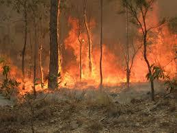 opwarming van de aarde Australië