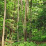 Rijke bossen absorberen CO2 en dienen ook de biodiversiteit. Foto: Pixnio.