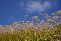 Sustainable biomass