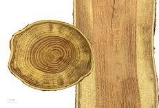houten vensters