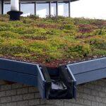Lanxmeer Green roof. Photo: Lamiot, Wikimedia Commons.
