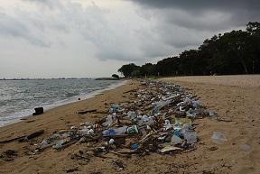 Litter_on_Singapore's_East_Coast_Park